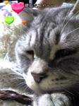 image/2010-01-08T21:25:531