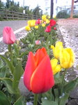 image/2011-04-15T18:12:57-1.jpg